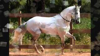 """António Mello Corrêa -""""Cavalo Ruço"""""""
