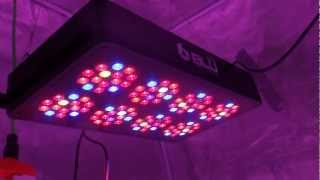 GrowBlu LED Indicator Plant - Day 0