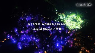A Forest Where Gods Live - Aerial Shoot  / 空撮 -