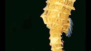 Hello seahorse Bestia Letra