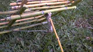 survival arapuca live bird trap