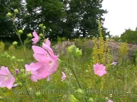РЕПЯШОК – природы ( nature of Ukraine )