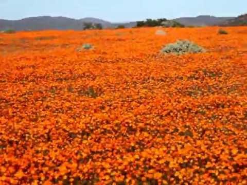 Namaqualand, South Africa,  南アフリカ、ナマクワランド 2012 13 Aug