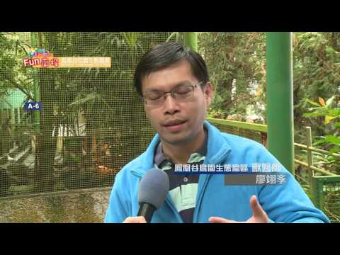 鹿谷鳳凰谷鳥園生態園區 - YouTube