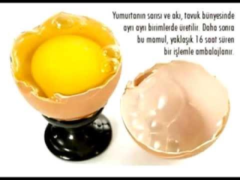 yumurta paketleme fabrikası