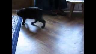 Crazy Cat - Curious Cat