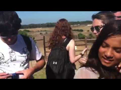 South Africa '12: A turtle pees on someone…