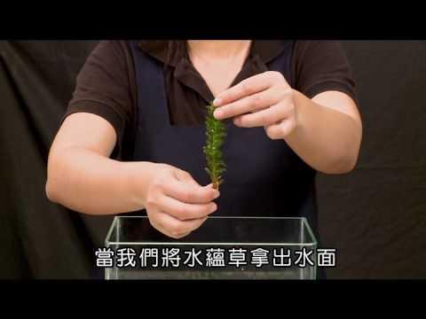 國小_自然_動手做:觀察沉水性植物【翰林出版_四上_第二單元 水生生物的世界】 - YouTube