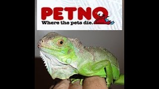 Petco Animal Abuse - Throws LIVE Baby Iguana in Dumspter!!