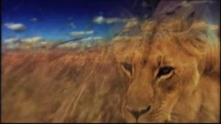 Roar By-Ray Boltz: Official Music Video
