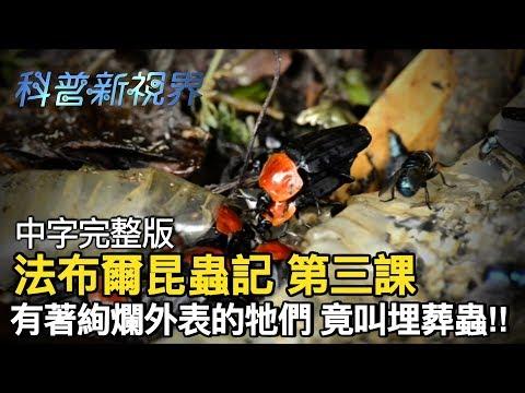 激昂的生命   幫忙清理生物遺骸的埋葬蟲,腐食性昆蟲聚集的這個死亡之軀,卻也是讓牠們生生不息的來源!! 【法布爾昆蟲記 第三課】全片線上看 - YouTube