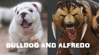 Bulldog and Alfredo
