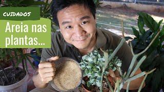 AREIA nas plantas - Devo ou não usar?