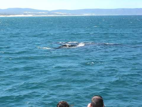 mother and child whale spotting at Hermanus South Africa dec 2010.avi
