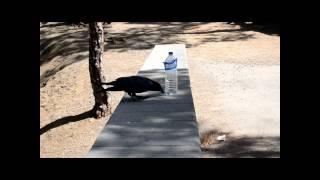 El Cuervo y la Botella (18.09.2012)
