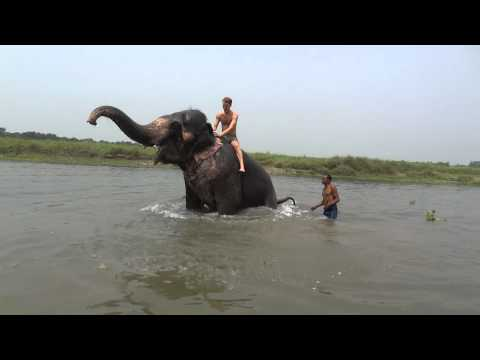 Riding an Elephant in the Rapti River in Sauraha, Nepal near Chitwan National Park