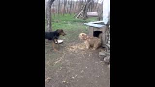 Bubi vs qeni