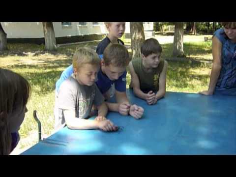 Ukraine, Rus'ka Polyana, Sanatorium Cherkasy 2012 Big Insect