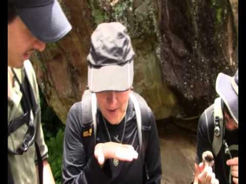 Annapurna Circuit – eating wasp larvae