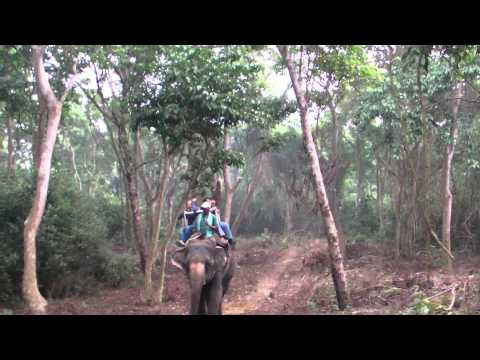 Into the Wild / Elephant Safari Vol.2