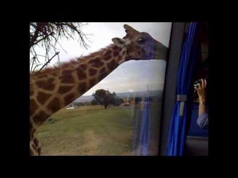 Safari at South Africa