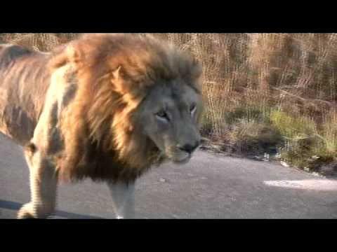 Safari, Kruger Park  2010  South Africa