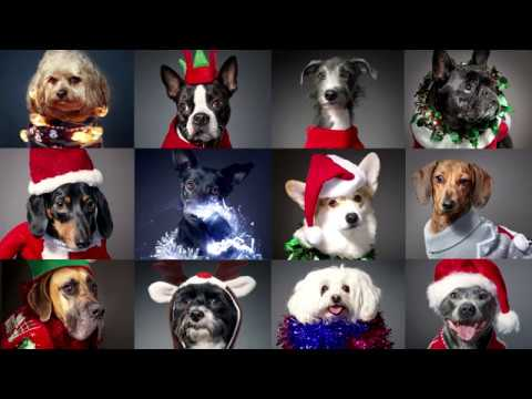 12 Dogs of Christmas | Christmas Jumper Day