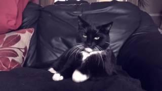 Bag Raiders Shooting Stars cat remix