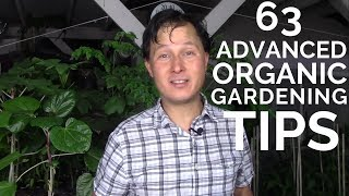 63 Advanced Organic Gardening Tips to Have the Best Vegetable Garden