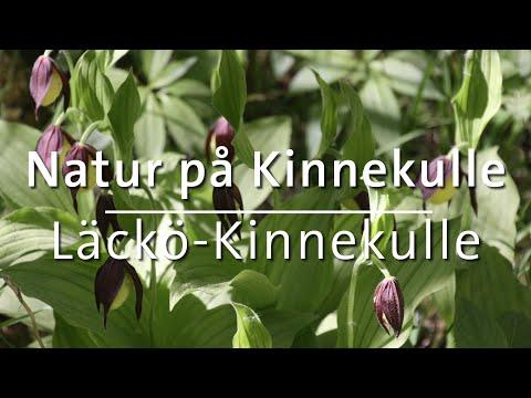 Den unika naturen på Kinnekulle