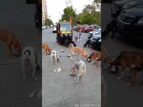dog feeding in mumbai