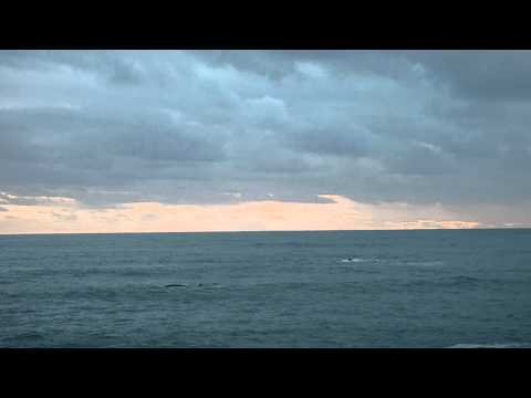 Southern Right Whales in De Kelders, South Africa October 2012 (Part 1)