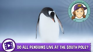 Animal Jam - Ask Tierney: Do all penguins live at the South Pole?