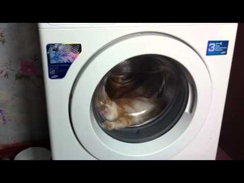 Cat in dryer Odessa Ukraine
