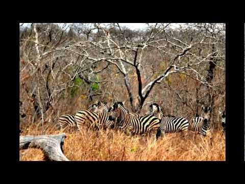 Safari at South Africa /// Güney Afrika'da Safari