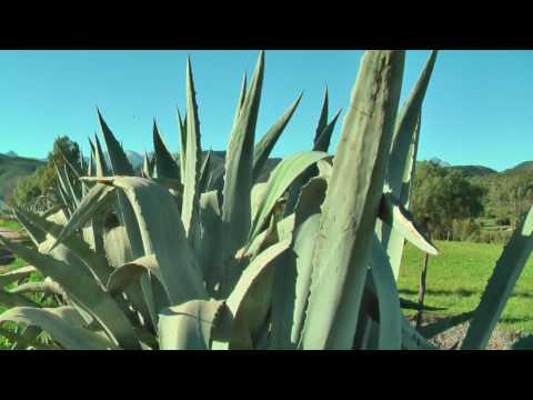 Kranskloof Südafrika 2009