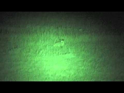 Night Game Drive – Fox.m4v