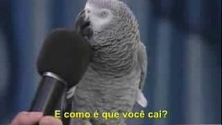 Papagaio falante legendado