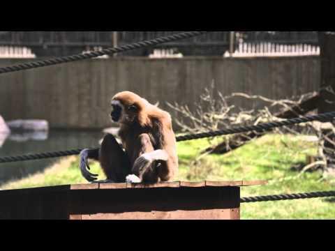 Årskort och artister, reklamfilm Parken Zoo Eskilstuna