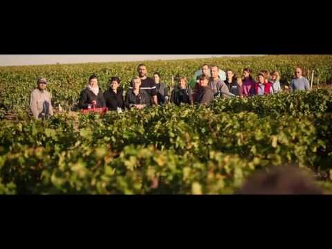 Följ med till vår producent Château Liversan!