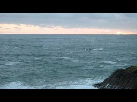 Southern Right Whales in De Kelders, South Africa October 2012 (Part 2)