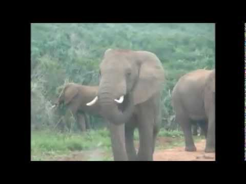 Elephant Traffic Jam