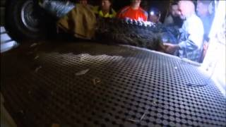 Four metre saltwater crocodile pulled from trap in Northern Territory – video   World news   The Gua