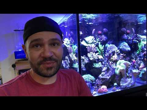 Your Invitation to Reefapalooza Orlando This Weekend
