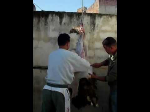 Skinning the Hanging Sheep