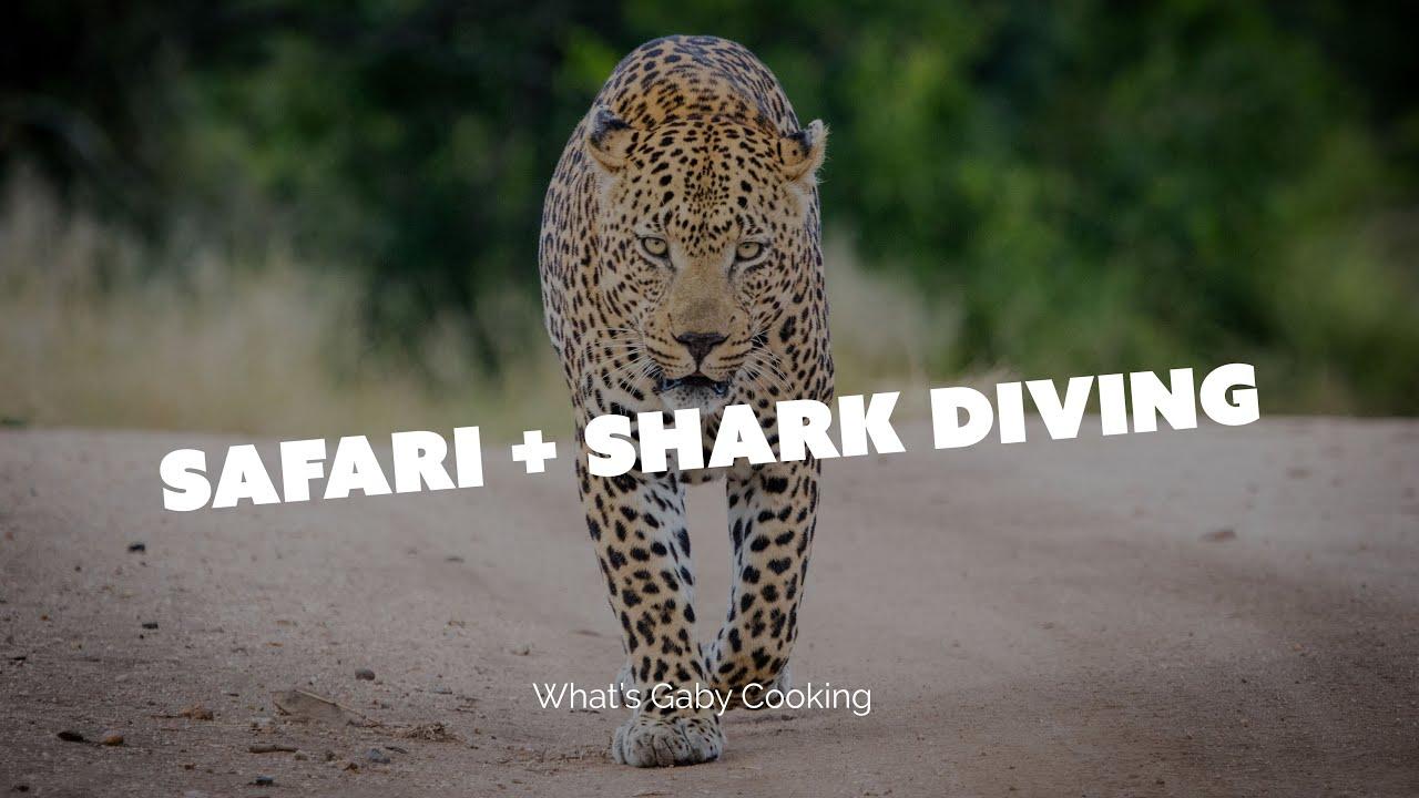 The Ultimate Vacation: Safari and Shark Diving…