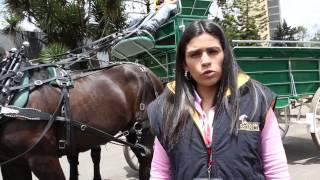 Caballos de tiro pesado en la Feria de las Colonias