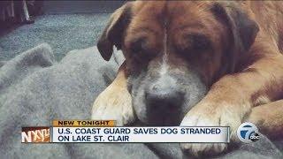 U.S. Coast Guard saves dog stranded on Lake St. Clair