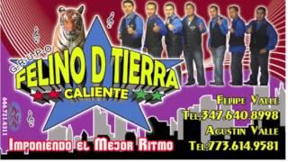 Grupo Felino De Tierra Caliente ( Audio ) Estilo Italiano