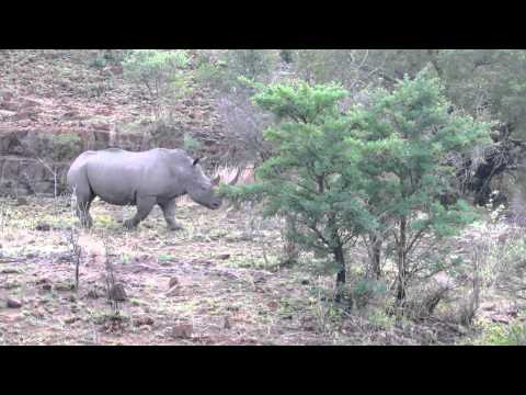 Rhino – Pilanesburg National Park – South Africa – November 2011